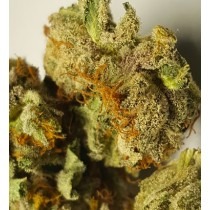 Platinum Girl Scout Cookies *AAAA Quad*