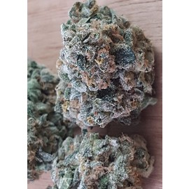 Northern Skunk