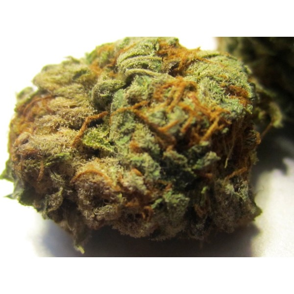 ORANGE KUSH MARIJUANA